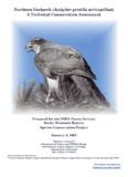 Northern Goshawk (Accipiter gentilis atricapillus) - USDA Forest