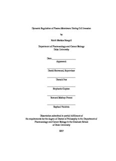 Kaleb Naegeli Dissertation