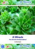 Hemorrhoid Miracle™ PDF, eBook by Holly Hayden