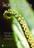 Springtime blossoms at Fairchild - Fairchild Tropical Botanic Garden