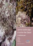Common coralline algae of northern New Zealand - NIWA
