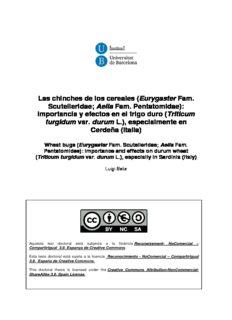 Las chinches de los cereales (Eurygaster Fam. Scutelleridae; Aelia Fam. Pentatomidae)