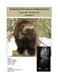 Monitoring Wolverines in Northeast Oregon - The Wolverine