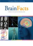 Brain Facts - A Primer on the Brain and Nervous System (7th Ed.) – KAVLI-Gatsby-Society