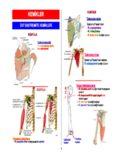 SMT Anatomi Atlası