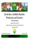 Koi & Koi x Goldfish Hybrids