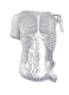 Sobotta Atlas of Human Anatomy, Volume 2: Thorax, Abdomen, Pelvis, Lower Limb