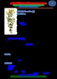 manual de plantas medicinales tomo 2
