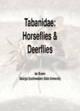 Tabanidae: Horseflies & Deerflies