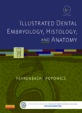 Illustrated Dental Embryology, Histology, and Anatomy, 4e