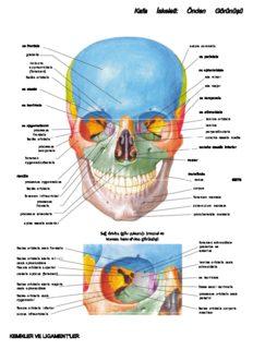Netter Anatomi Atlası