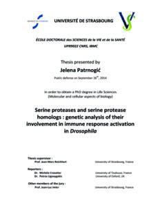 Jelena Patrnogić Serine proteases and serine protease homologs