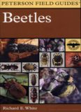 Beetles : A Field Guide to the Beetles of North America