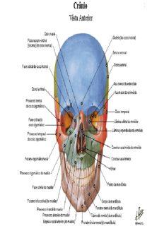 Atlas de Anatomia Humana – Netter